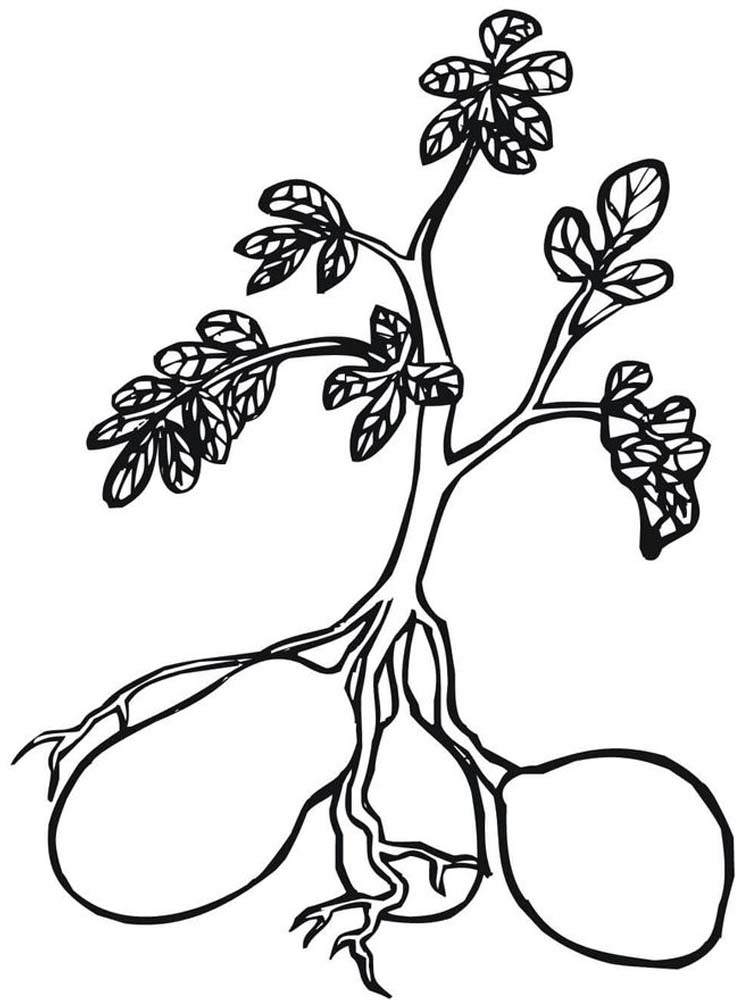 plant zombie coloring pages printable