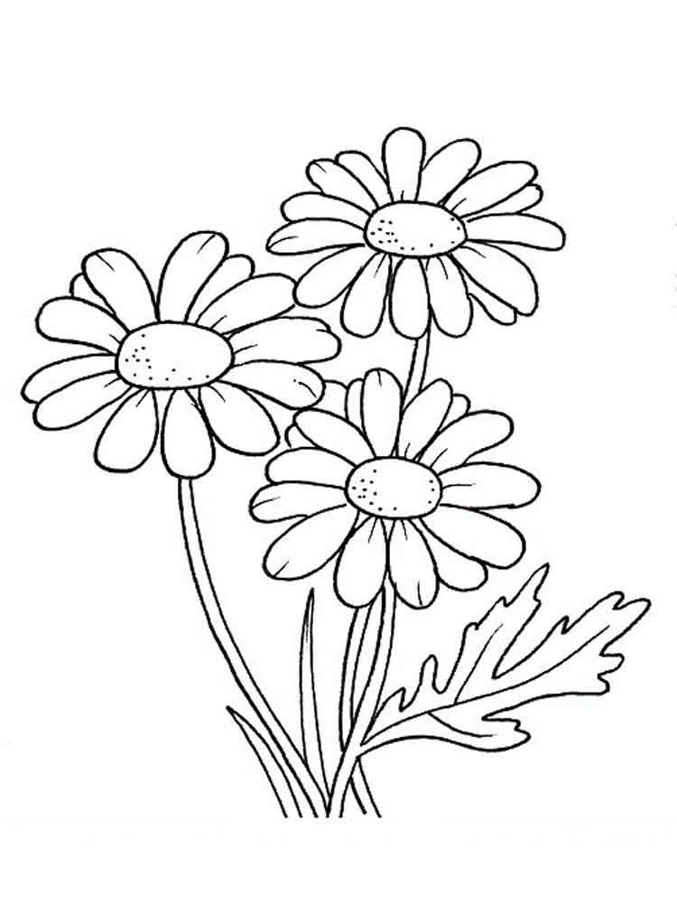 printable daisy flower coloring pages