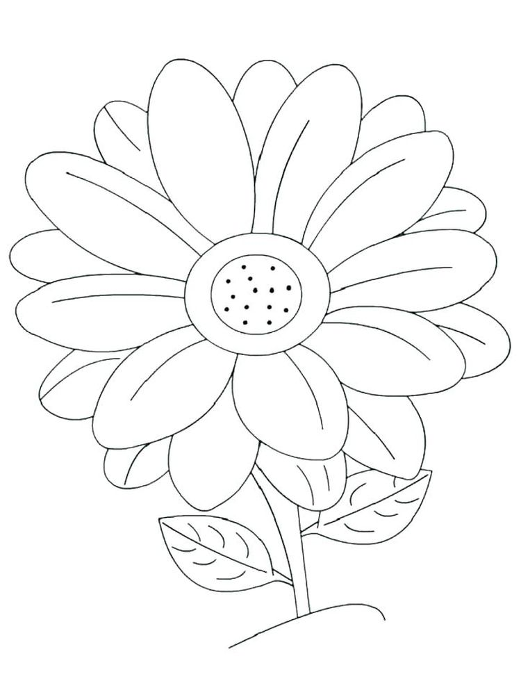 printable daisy flower colouring pages