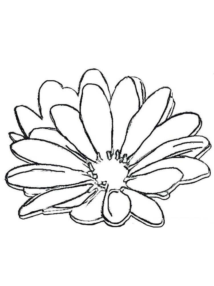 printable free coloring pages daisy flower