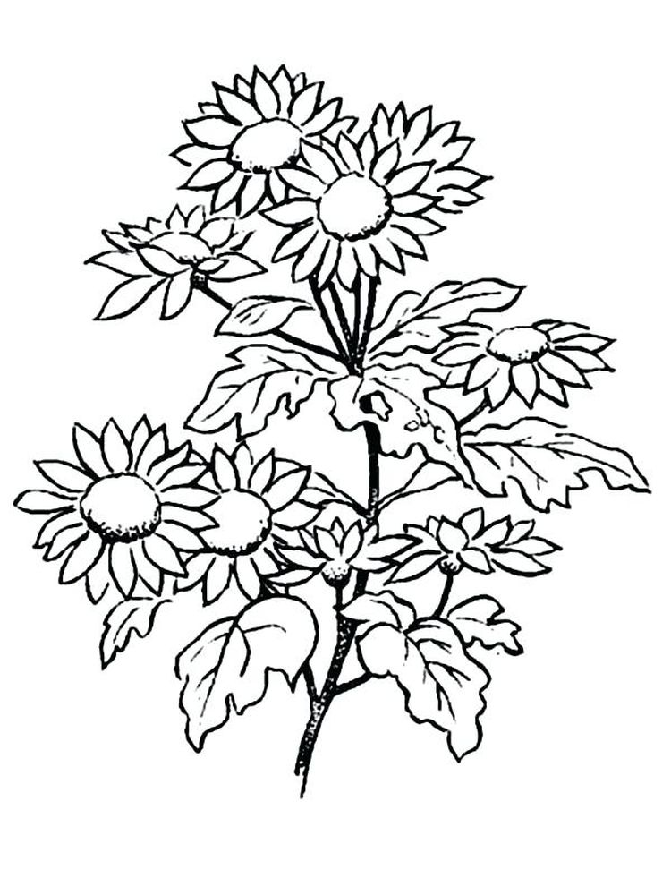 printable free printable daisy flower coloring pages