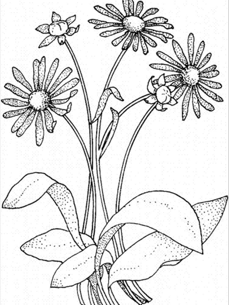 printable girl scout daisy flower coloring pages