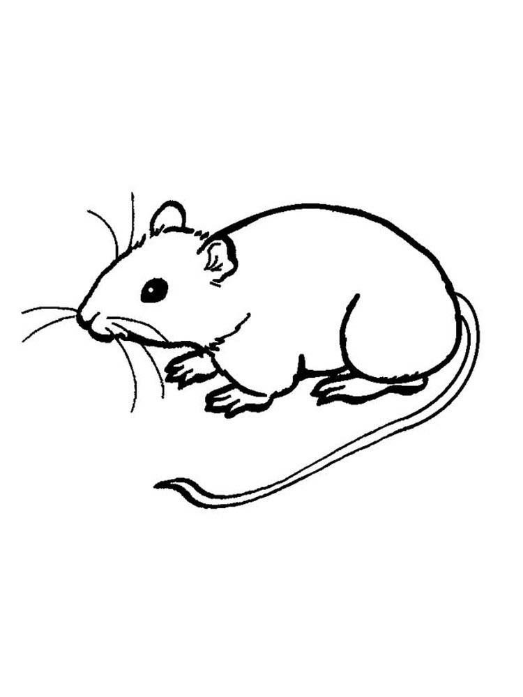 printable mouse eating cheese coloring page