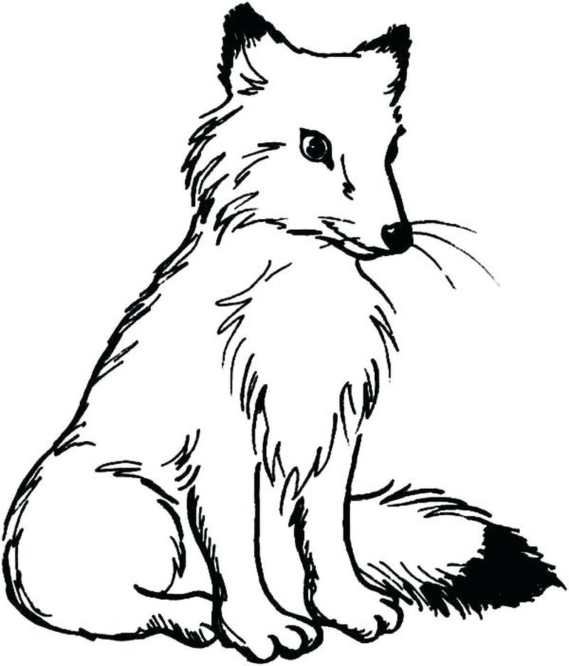 red fox coloring pagesPrintable