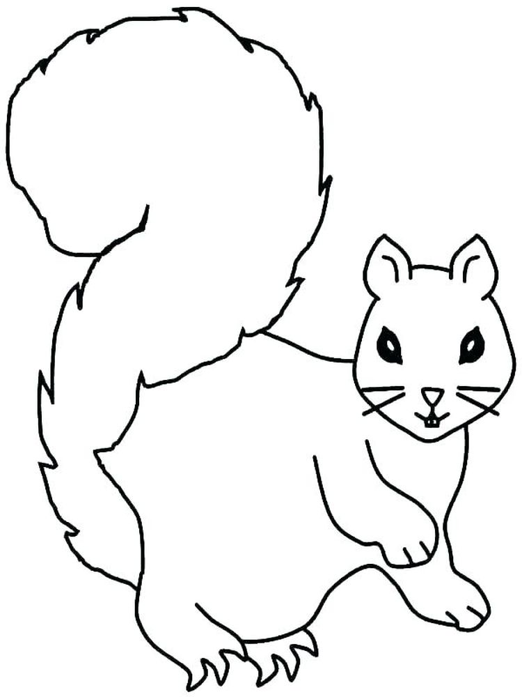 Best Squirrel Coloring Pages Free Printable