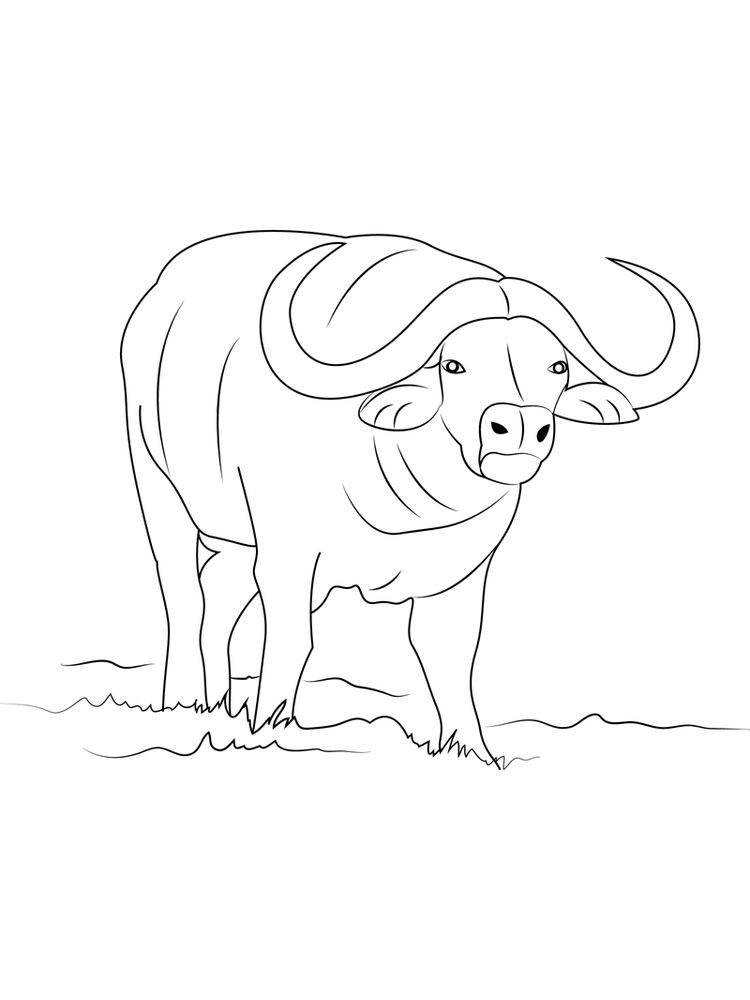 Buffalo Coloring Pages