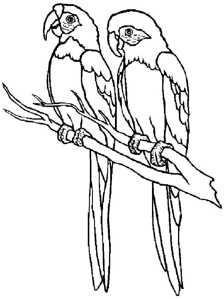 Download Parrot Coloring Pages Free Printable