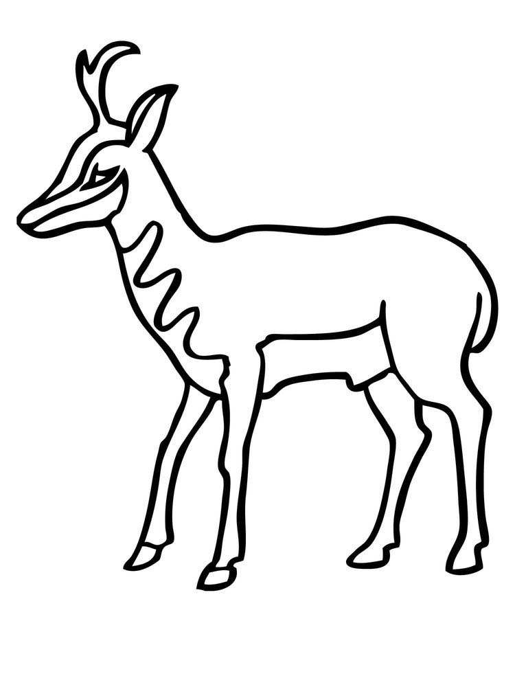 Free Impala coloring pages printable