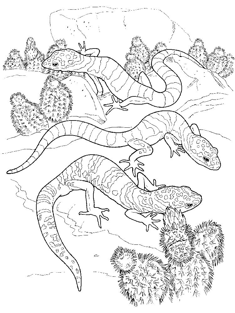 Free Lizard coloring pages printable