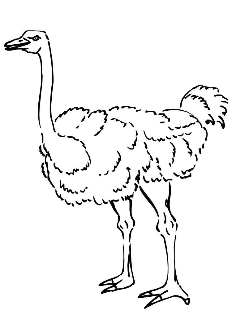 Free Ostrich Printable Coloring Pages