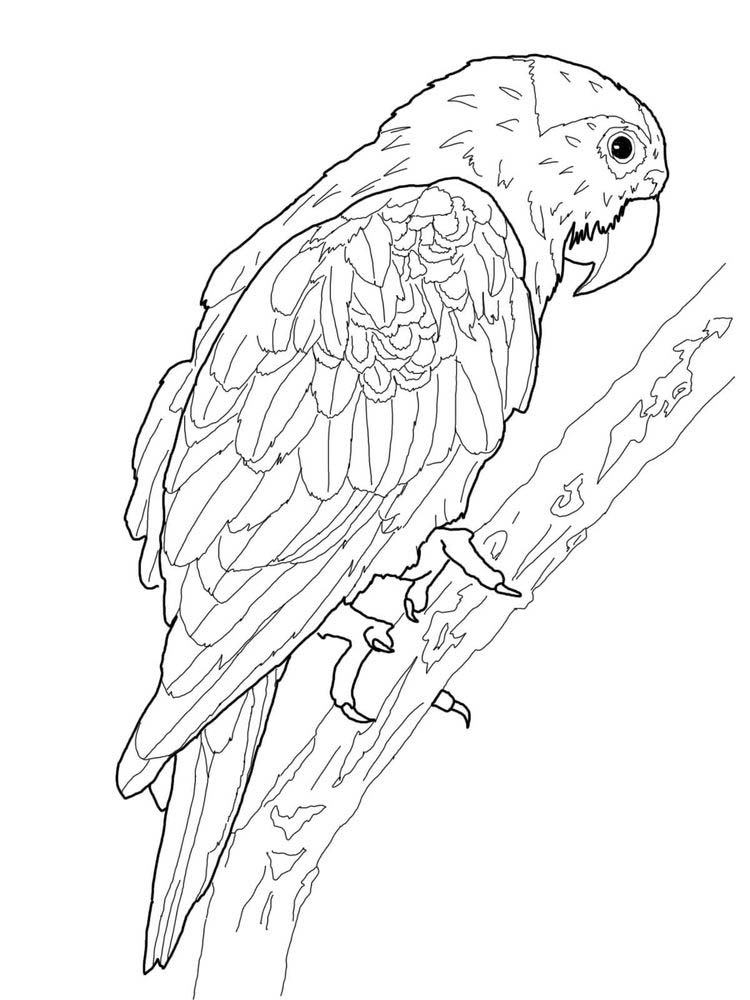 Free Parrot Coloring Pages Printable