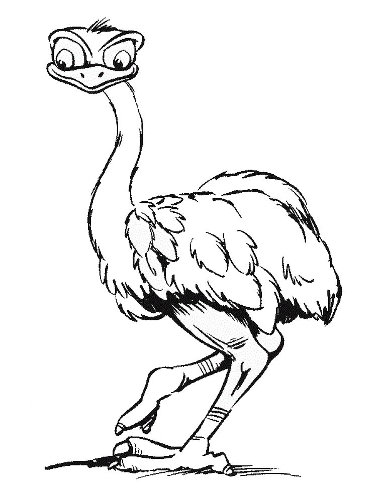 Free Printable Ostrich Coloring Pages Pdf