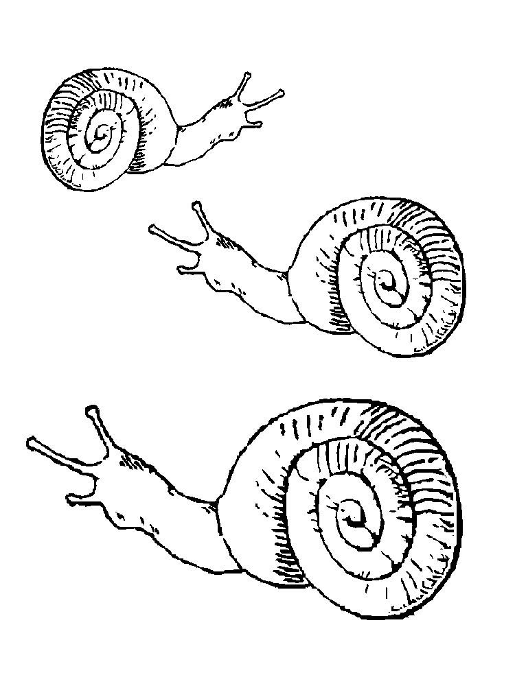Free Printable Snail Coloring Pages Pdf