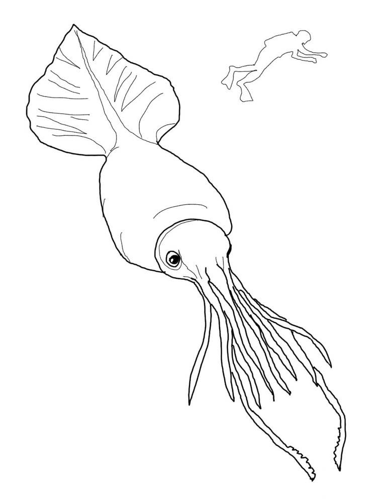 Free Squid Coloring Pages To Print