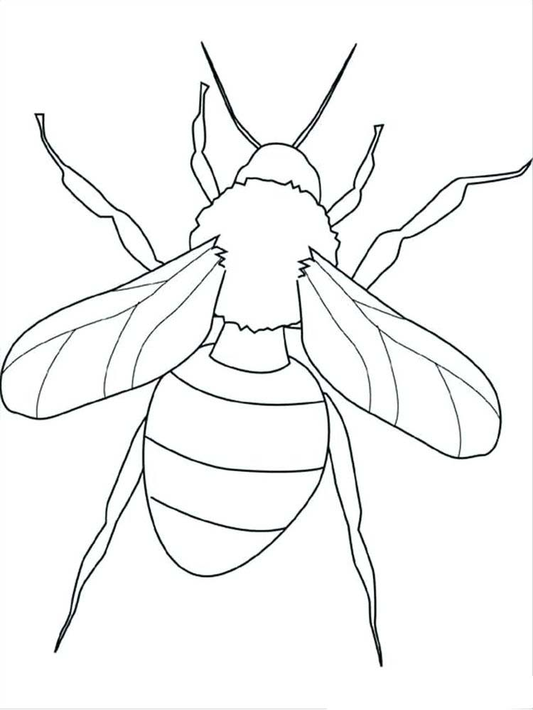 Insects Coloring Page print
