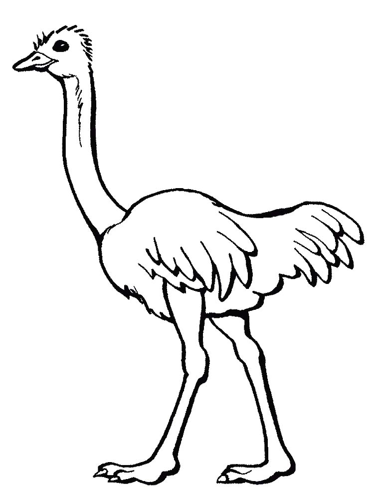 Ostrich Coloring Pages Online