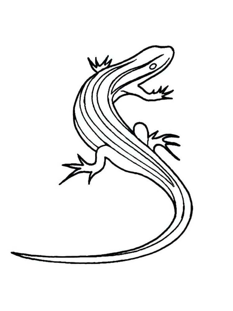 Printable Baby Lizard Coloring Pages