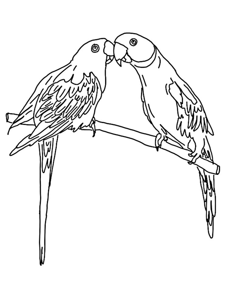 Printable Cartoon Parrot Coloring Pages