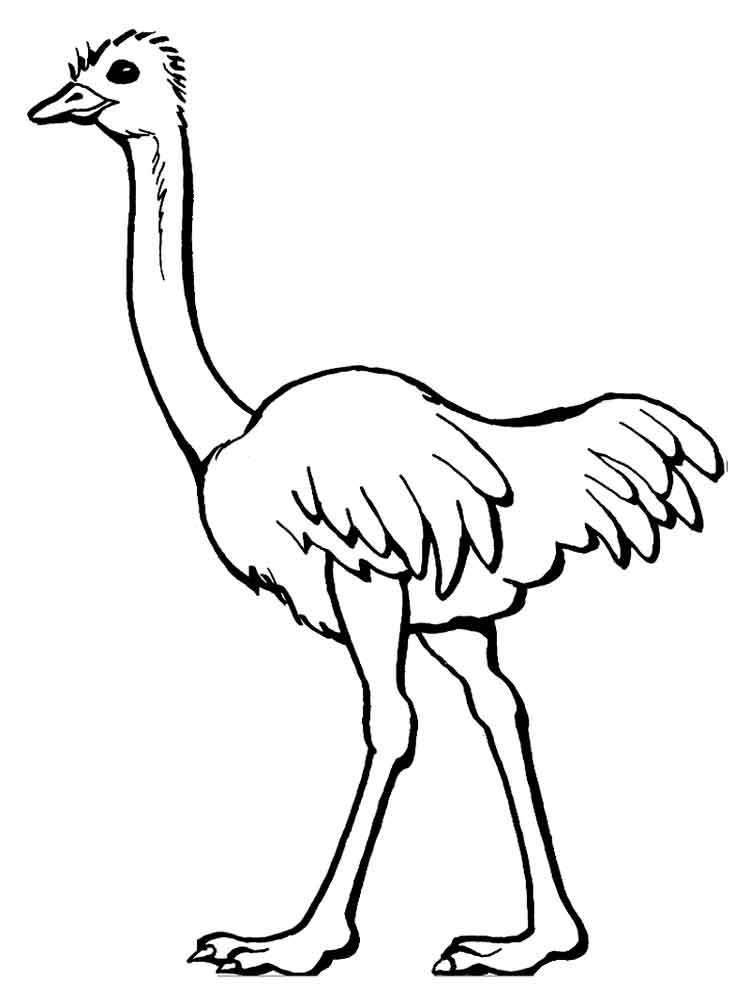 Printable Coloring Page Of Ostrich