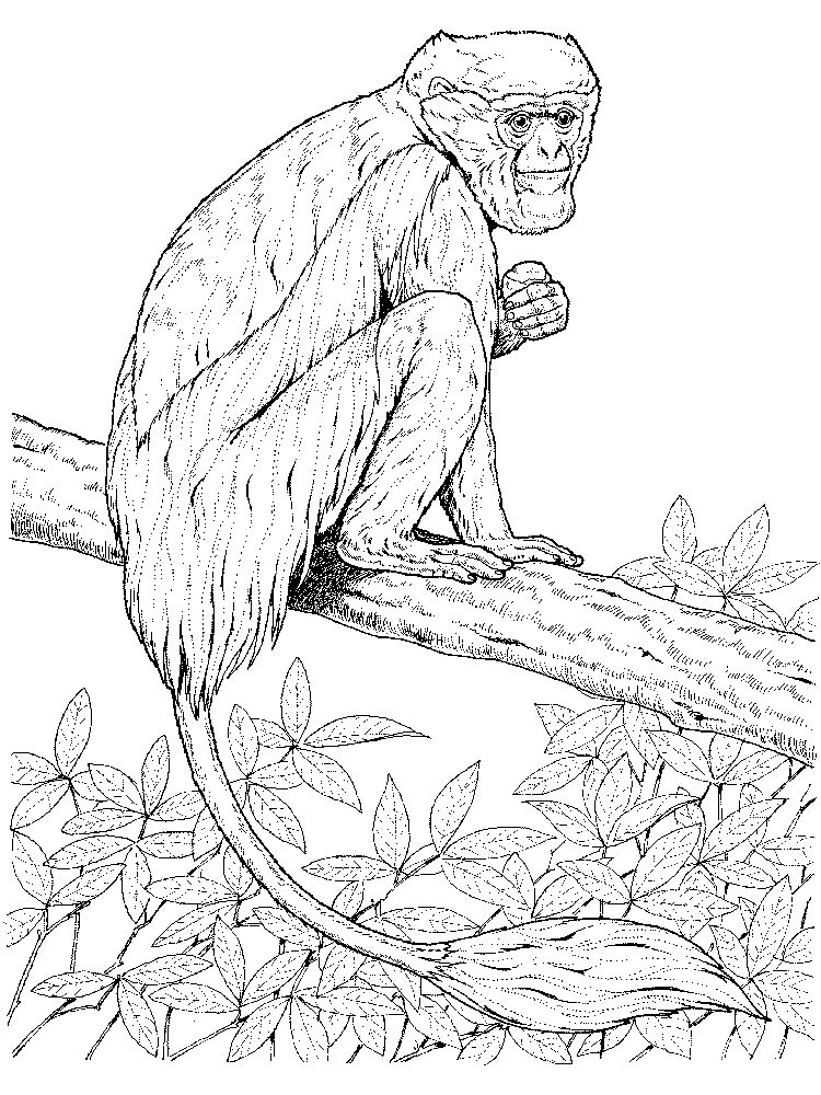 Printable Coloring Pages Of A Lemur