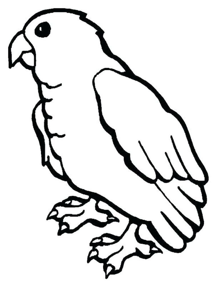 Printable Coloring Pages Of A Parrot