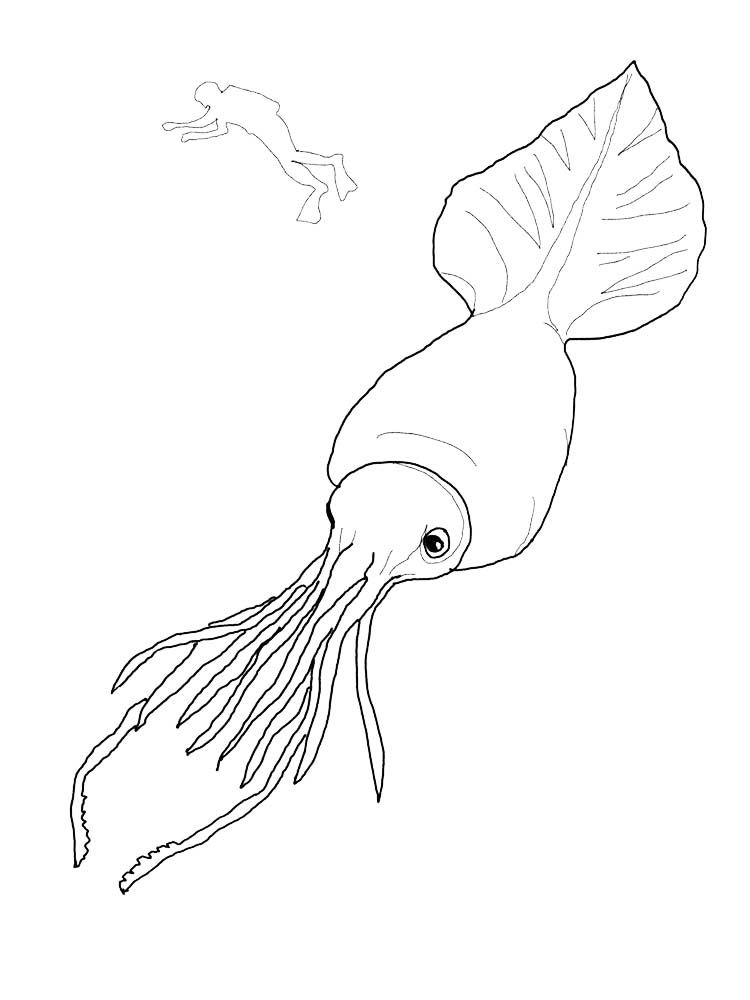 Printable Colossal Squid Coloring Pages