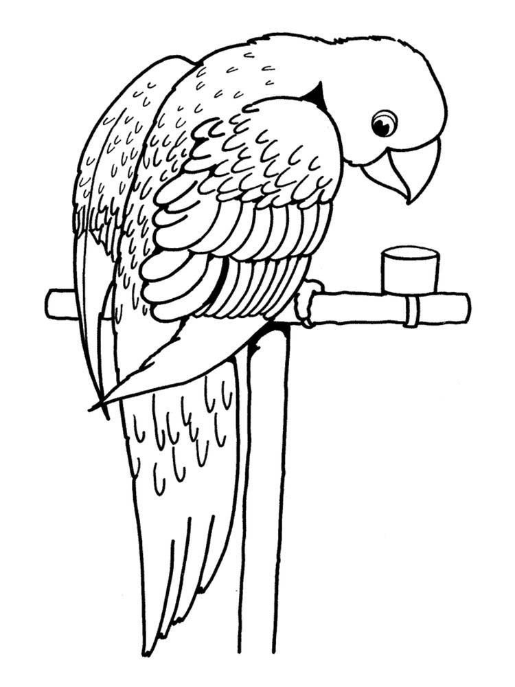Printable Cute Parrot Coloring Pages