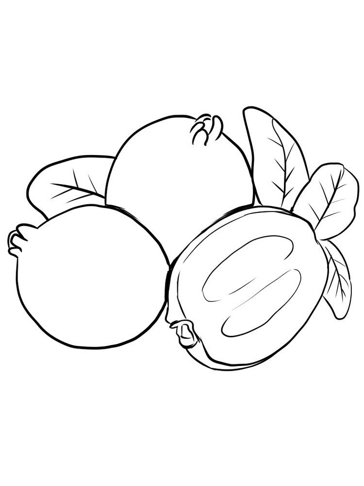 Printable Feijoa coloring picture print