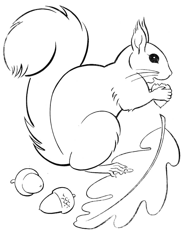 Printable Flying Squirrel Coloring Page