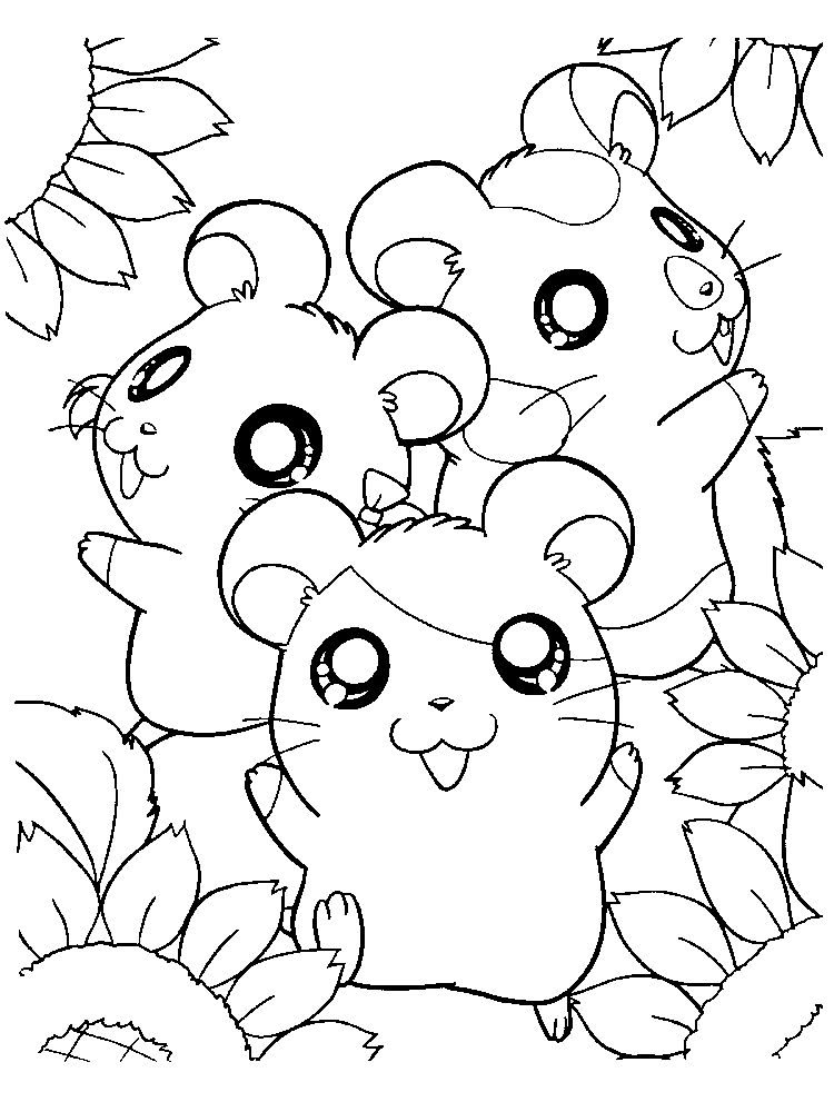 Printable Hamster Coloring Pages Free