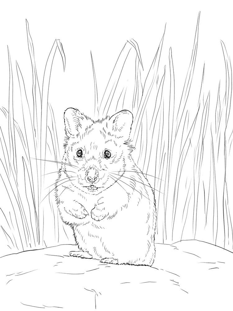 Printable Hamster Coloring Pages Pdf