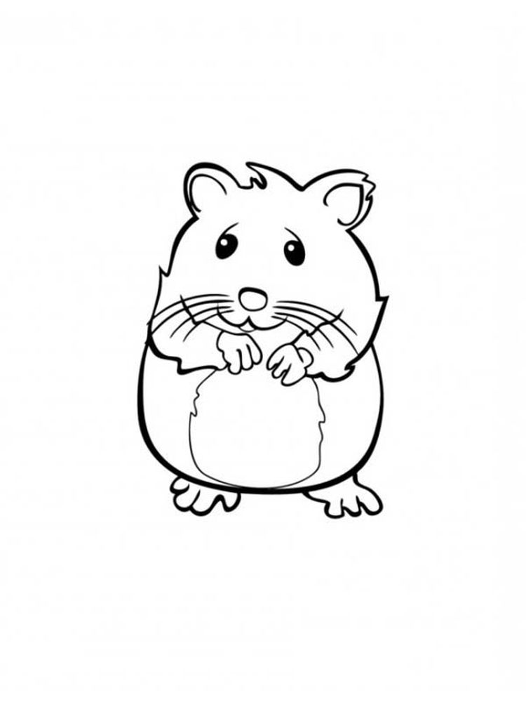 Printable Hamster Wheel Coloring Pages