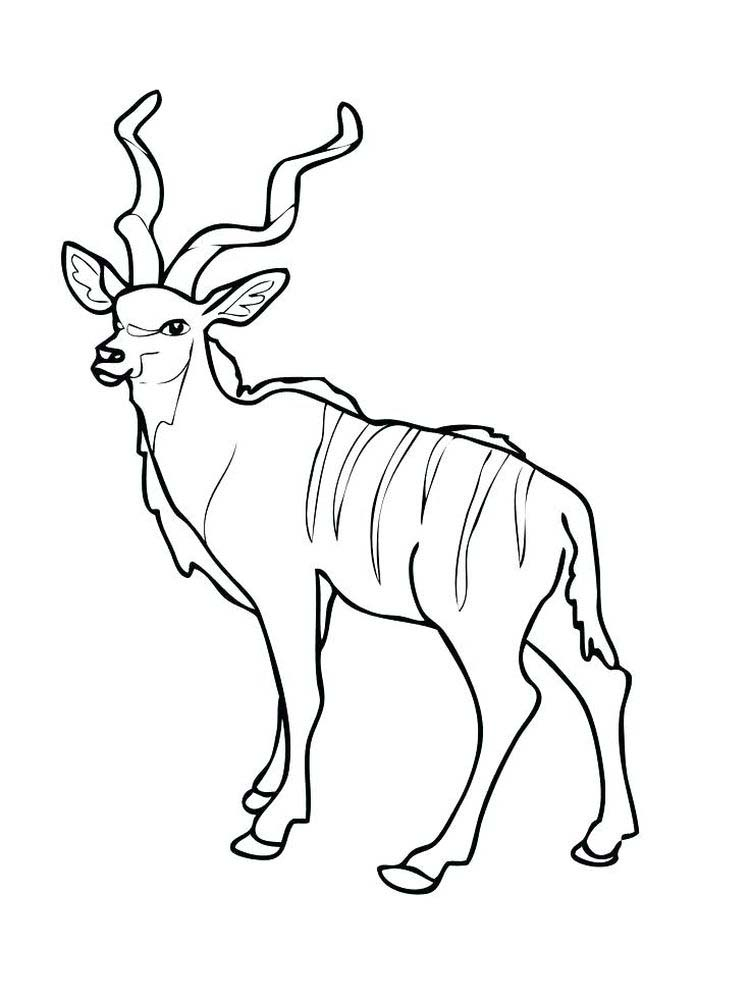 Printable Impala coloring pages download