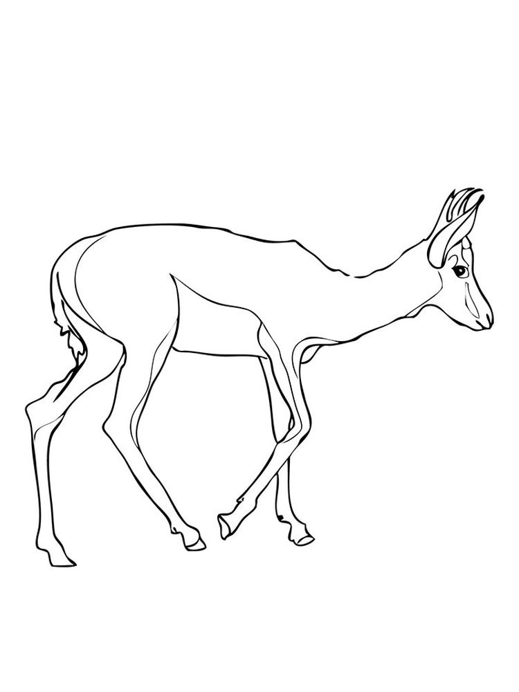 Printable Impala coloring pages free