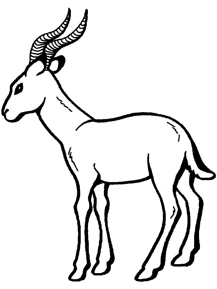 Printable Impala coloring pages print