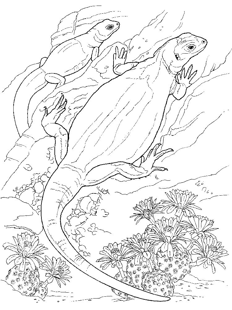 Printable Lizard Coloring Pages For Preschool