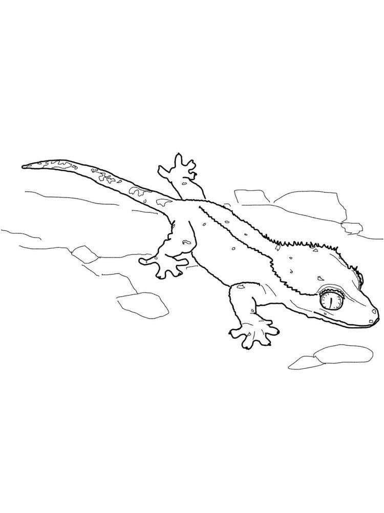 Printable Lizard Coloring Pages Free