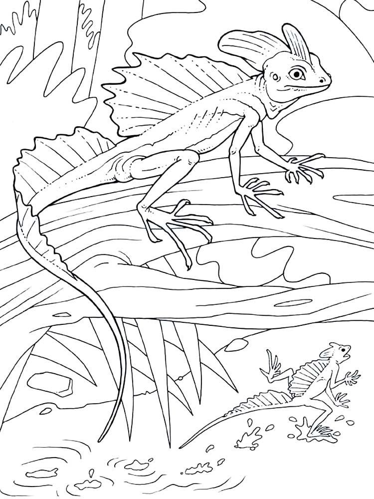 Printable Lizard coloring pages picture