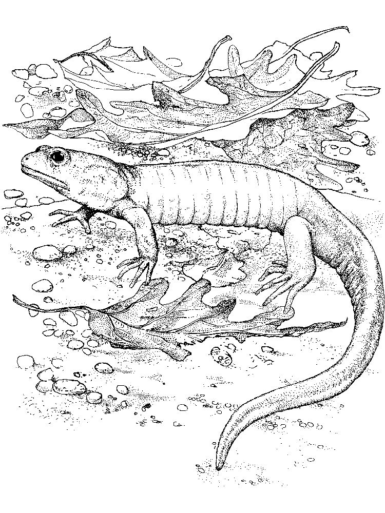Printable Lizards Coloring Pages