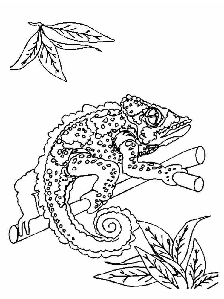 Printable Monitor Lizard Coloring Pages