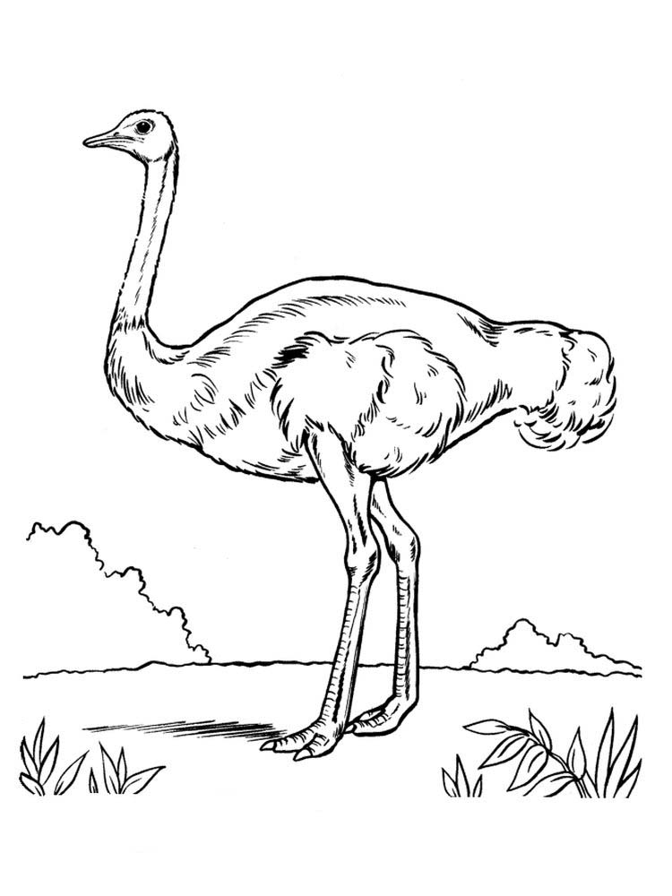 Printable Ostrich Coloring Pages Free