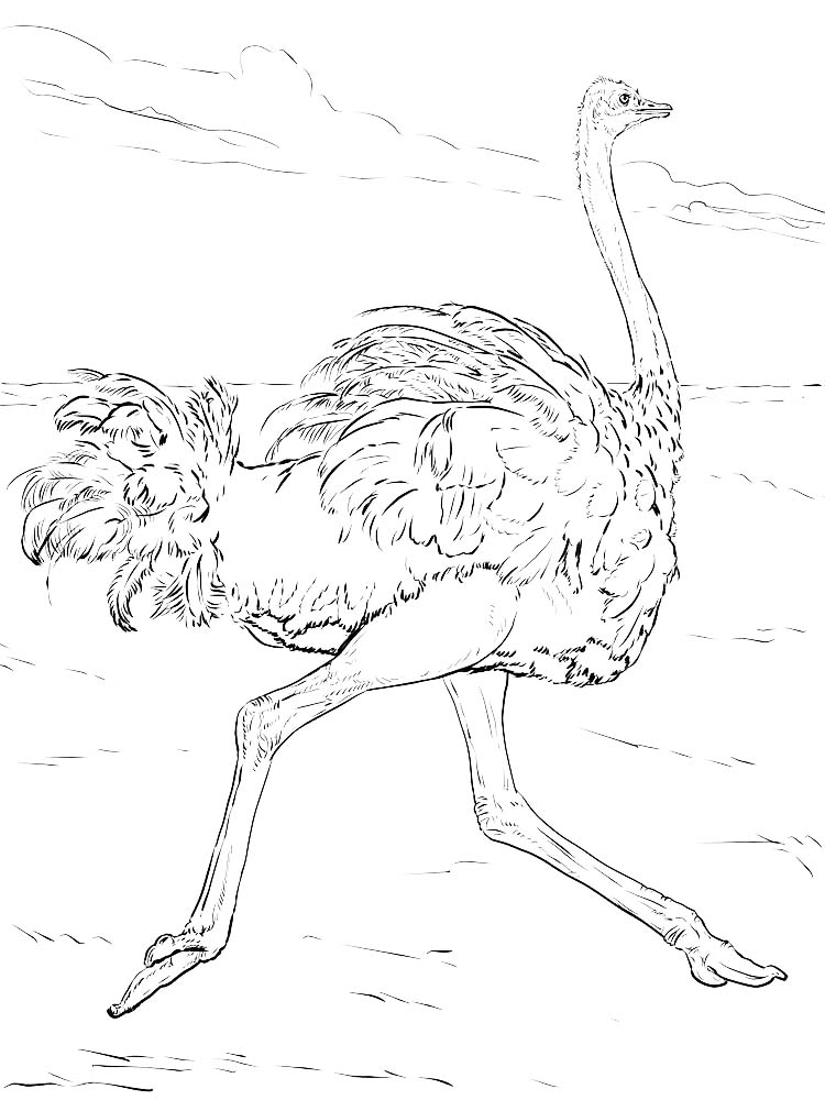 Printable Ostrich Coloring Pages To Print