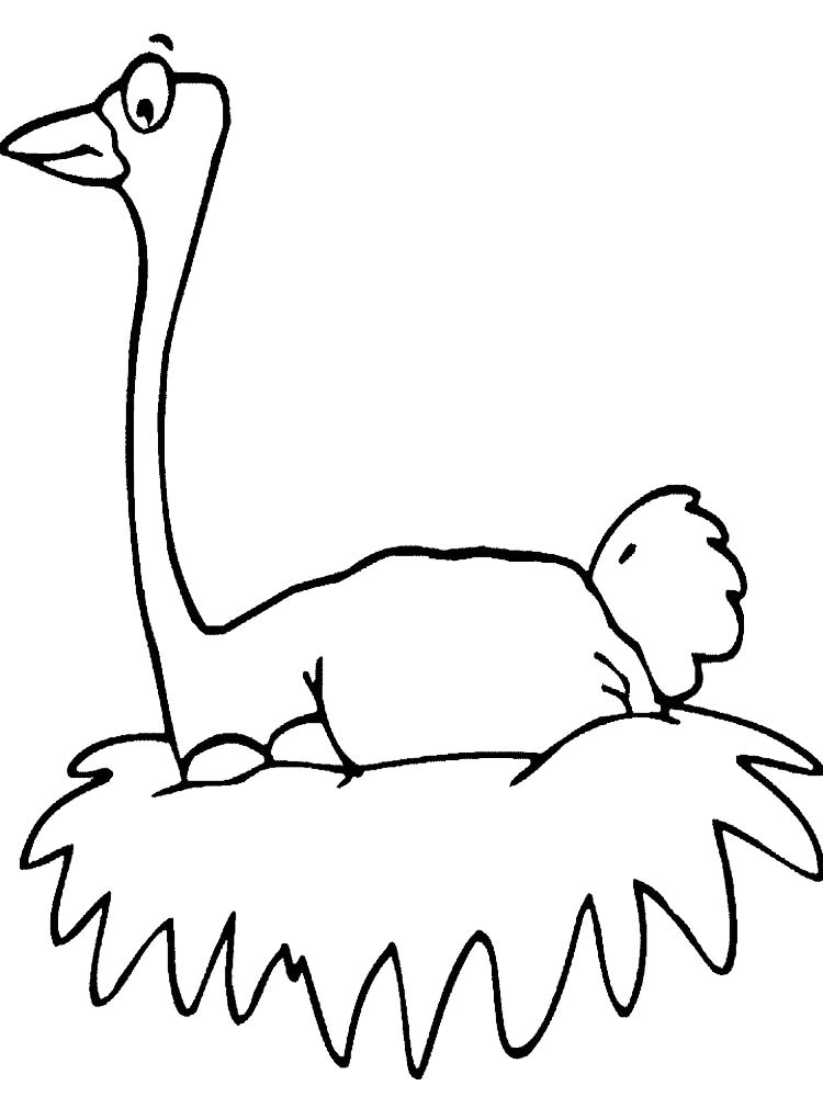 Printable Ostrich Coloring Pages
