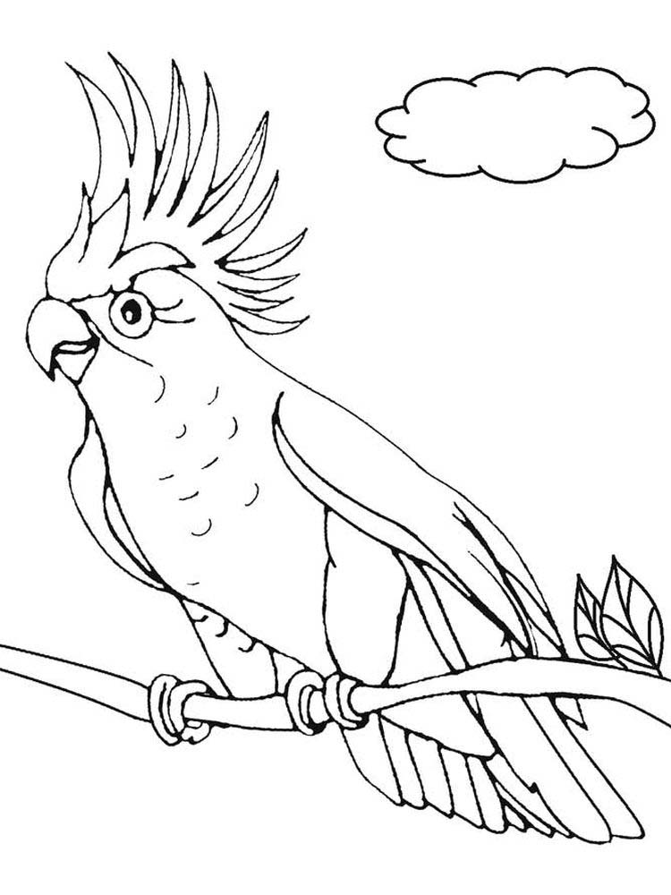 Printable Parrot Coloring Pages For Adults