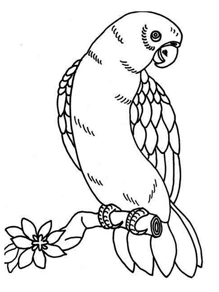 Printable Parrot Coloring Pages For Preschoolers