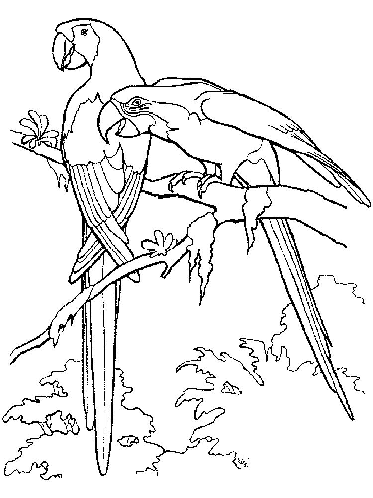 Printable Parrot Coloring Pages Free