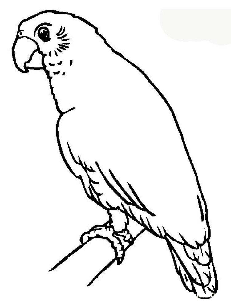 Printable Parrot Coloring Pages Online