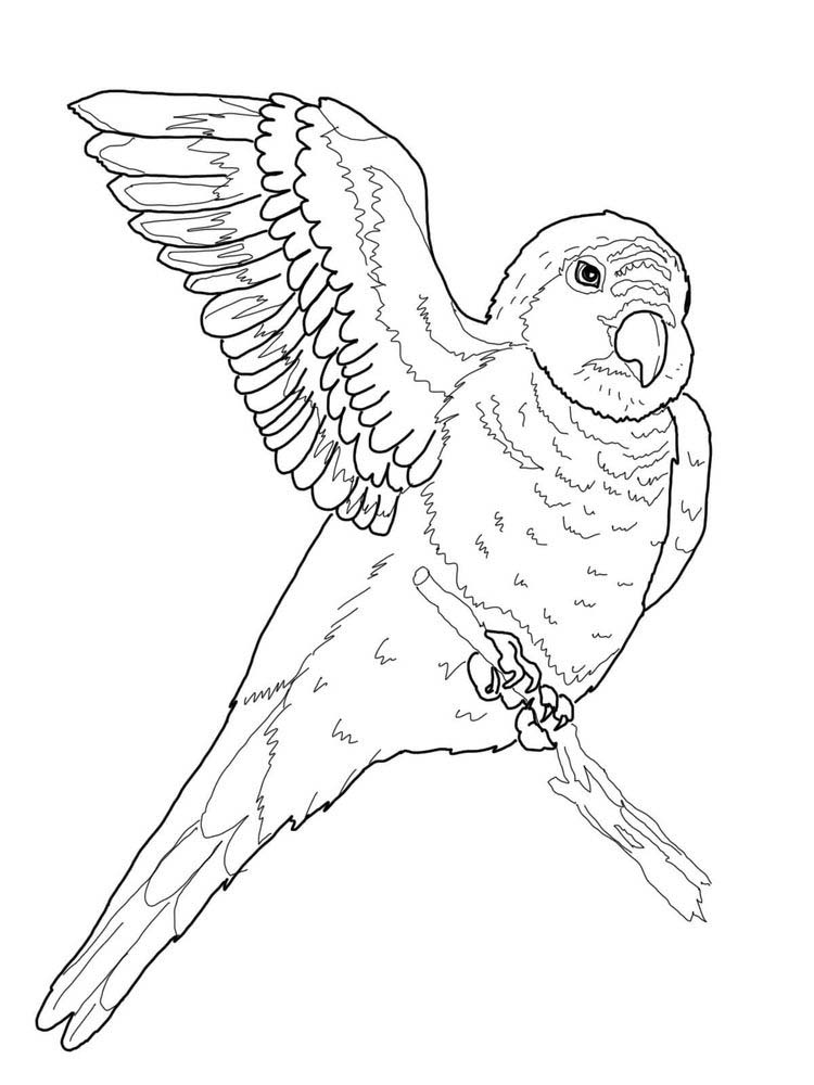Printable Parrot Coloring Pages Pdf