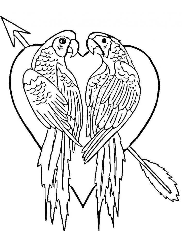 Printable Parrot Coloring Pages To Print