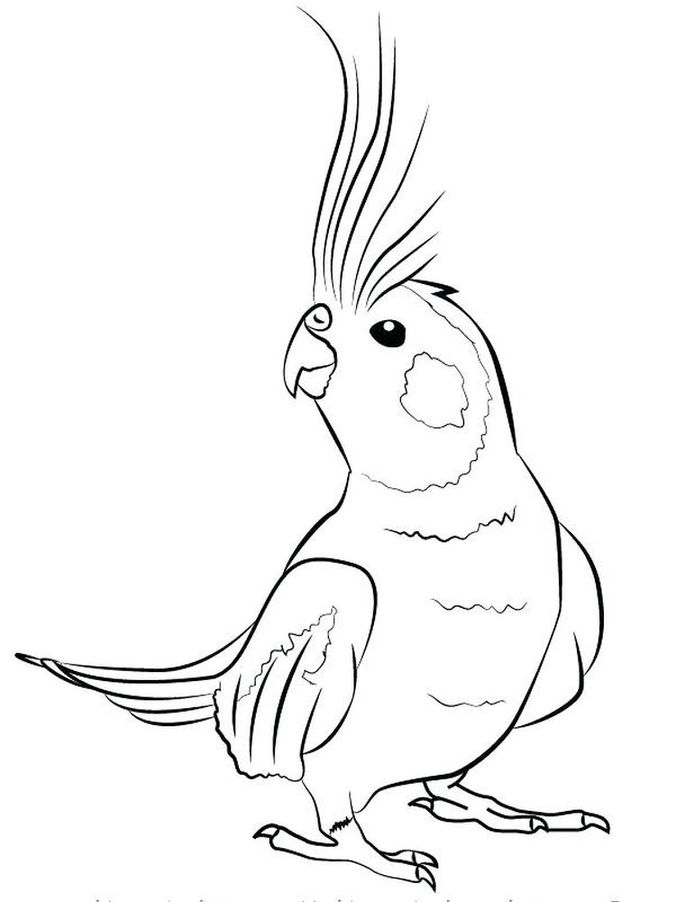 Printable Pirate Parrot Coloring Pages